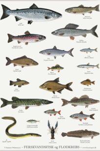 Ferskvandsfisk - susanne weitemeyer