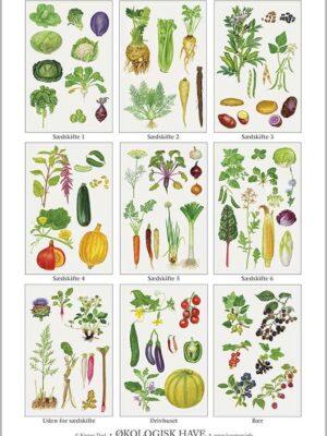 Økologisk have - Kirsten Lind