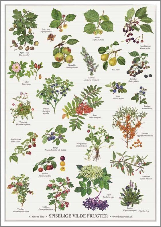 spiselige vilde frugter - Kirsten Tind